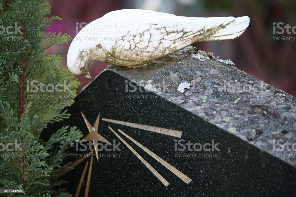 White dove on headstone stock photo