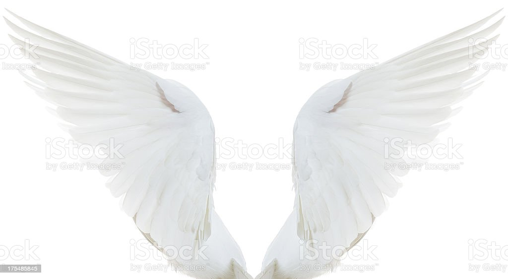 White Dove Spread Wings stock photo