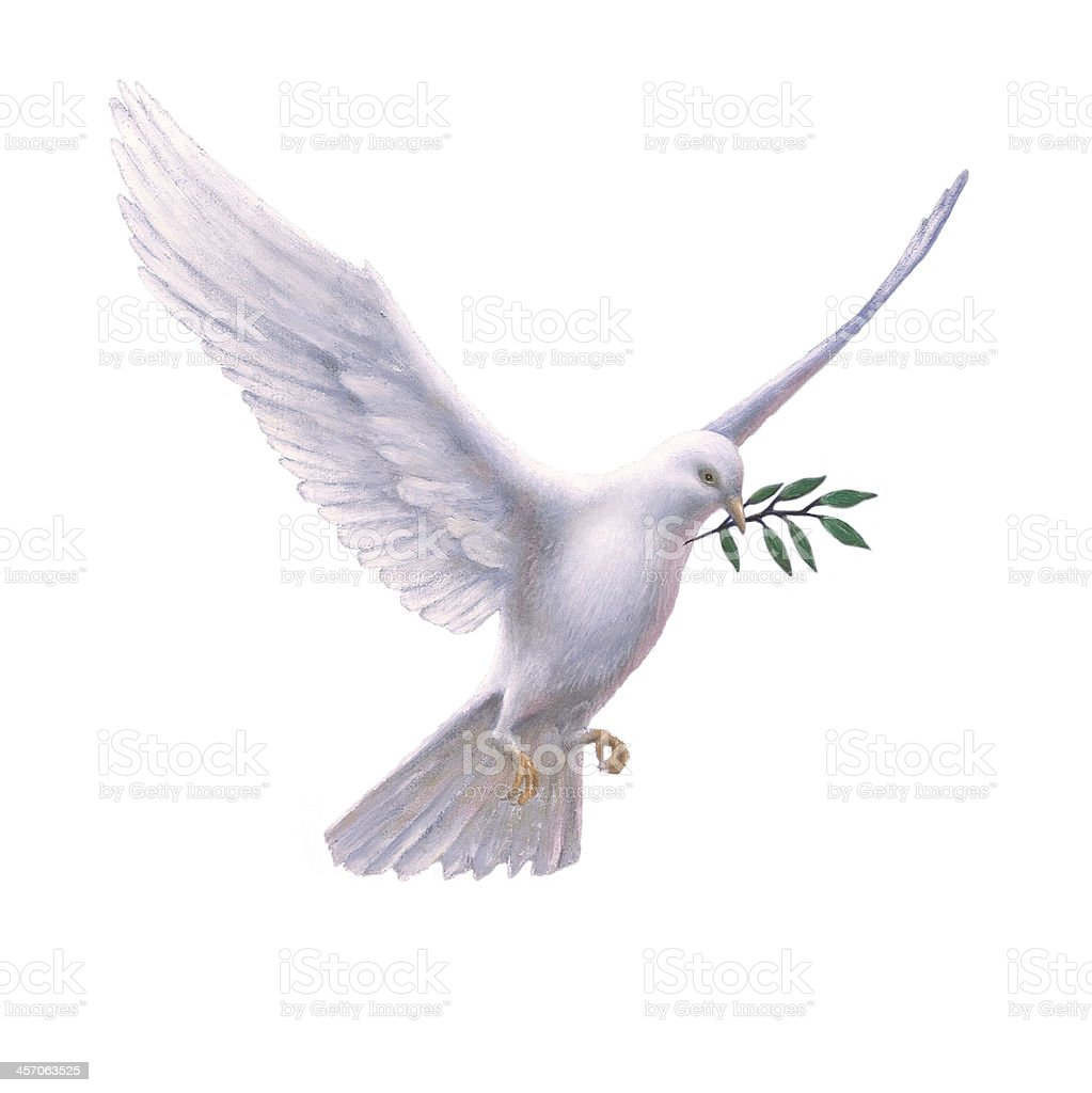 White Dove with Olive Branch stock photo