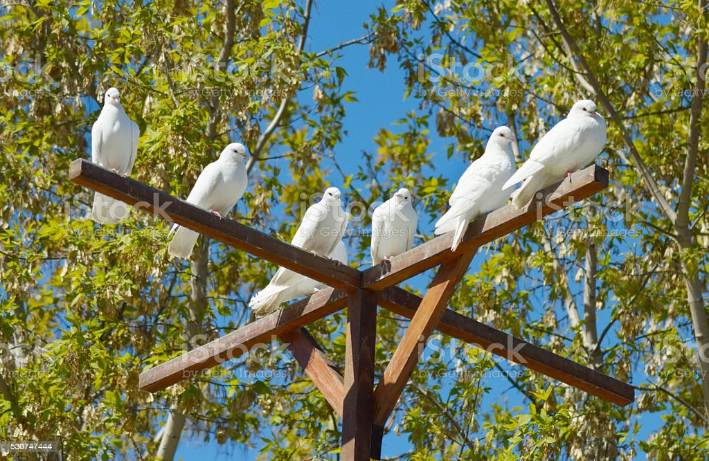 white doves - a symbol of peace and love stock photo