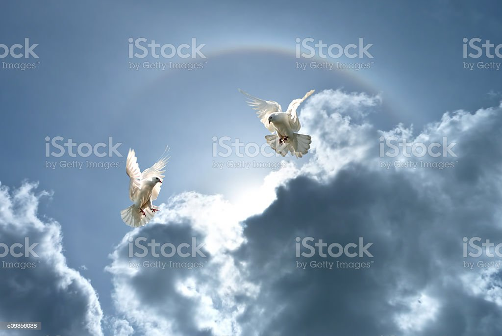 White doves against clouds and rainbow stock photo