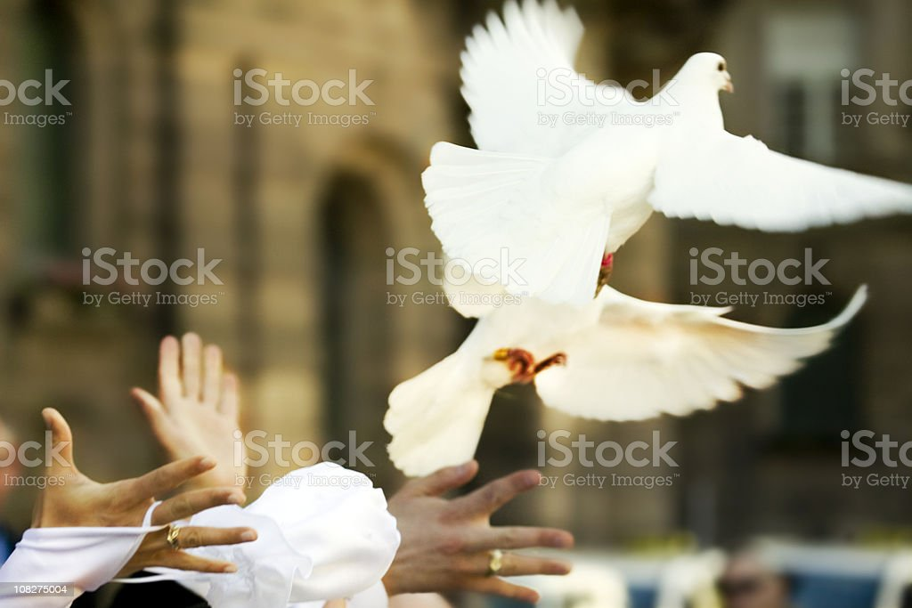 White Doves Flying Away from Newlywed's Hands stock photo