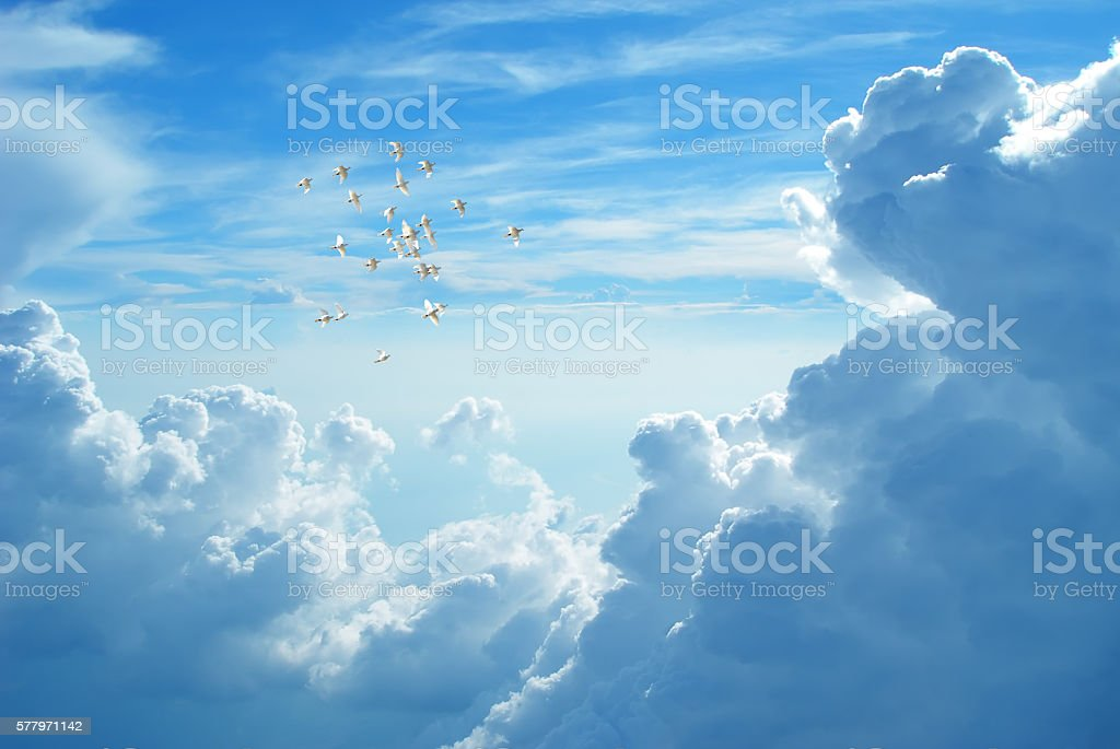 White doves flying in blue cloudy sky stock photo