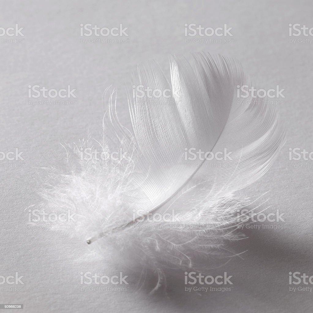 white down feather stock photo