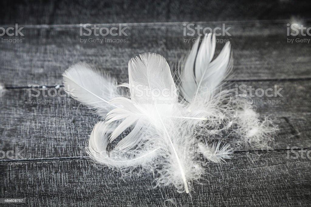 White Down Feathers stock photo
