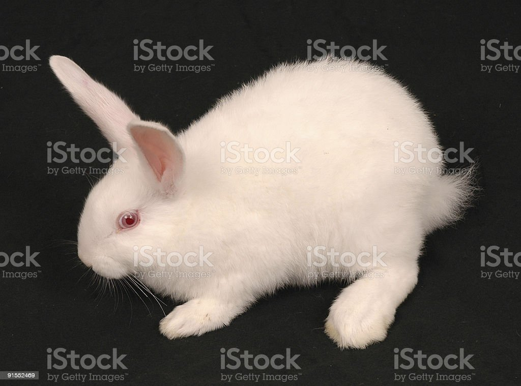 White Easter Bunny 5 stock photo