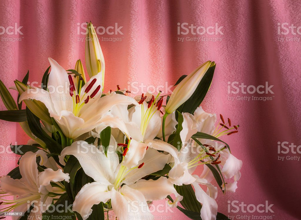 White Easter Lily arrangement against draped pink background (P) stock photo