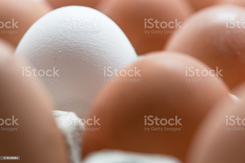 White egg surrounded by brown eggs in a box.Close up stock photo