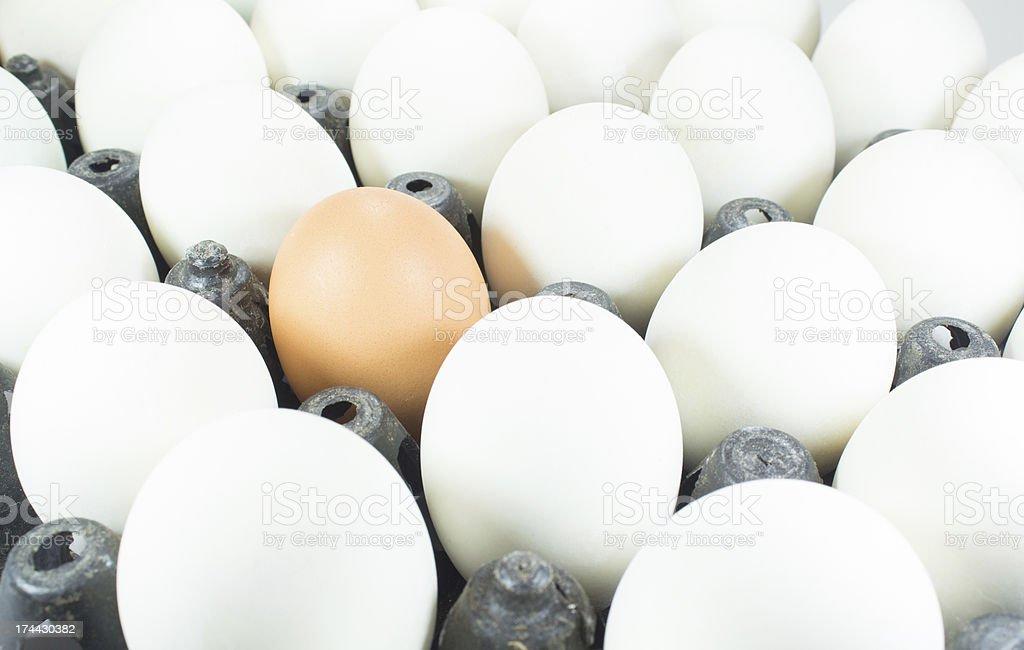 Белые яйца и коричневый Яйцо заказать в пластиковой коробке Стоковые фото Стоковая фотография