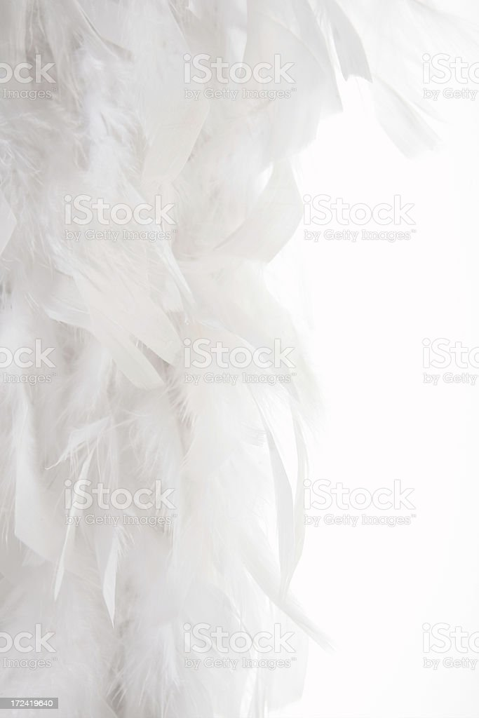 white feather background royalty-free stock photo