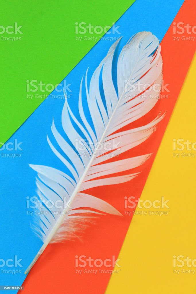 White feather on colorful background stock photo