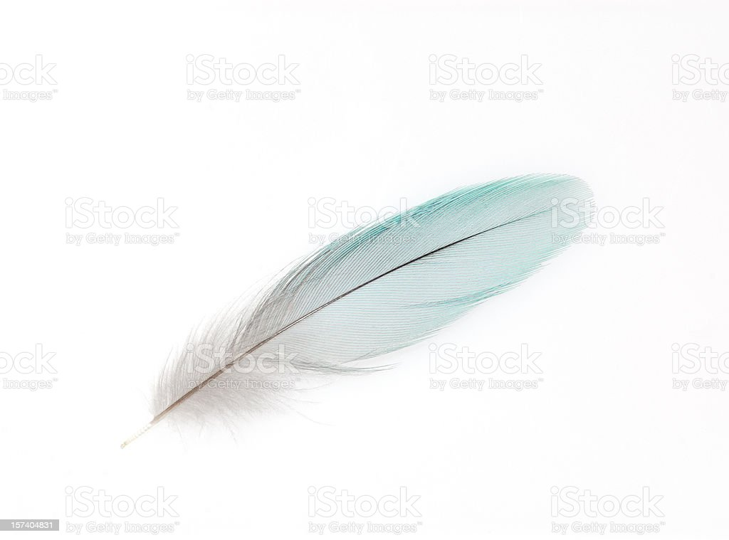 A white feather on white background stock photo