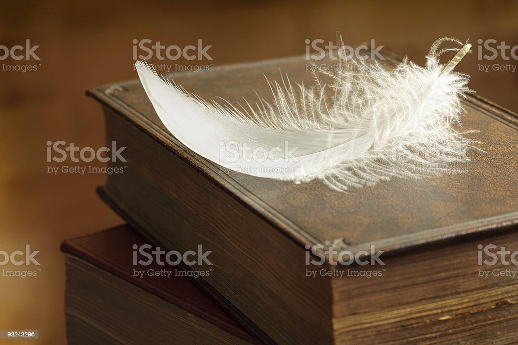 Белый Перо Стоковые фото Стоковая фотография