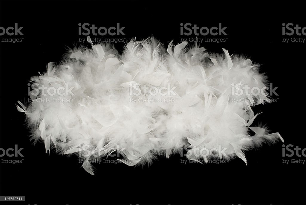 white feathers stock photo