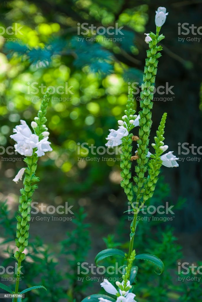 White field flower close-up stock photo