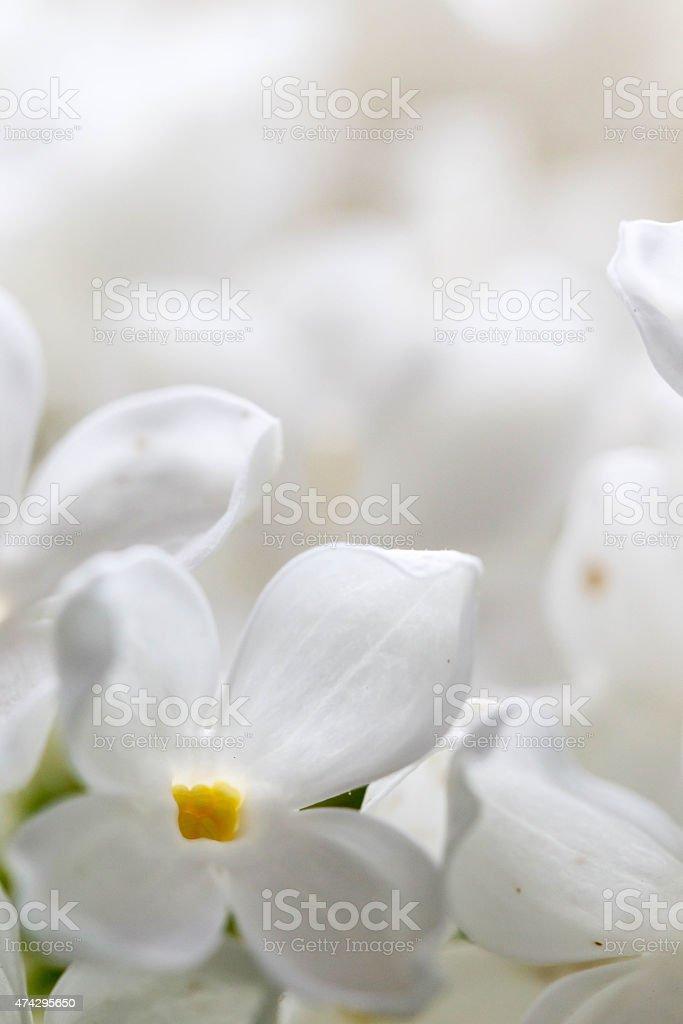 White flora background stock photo