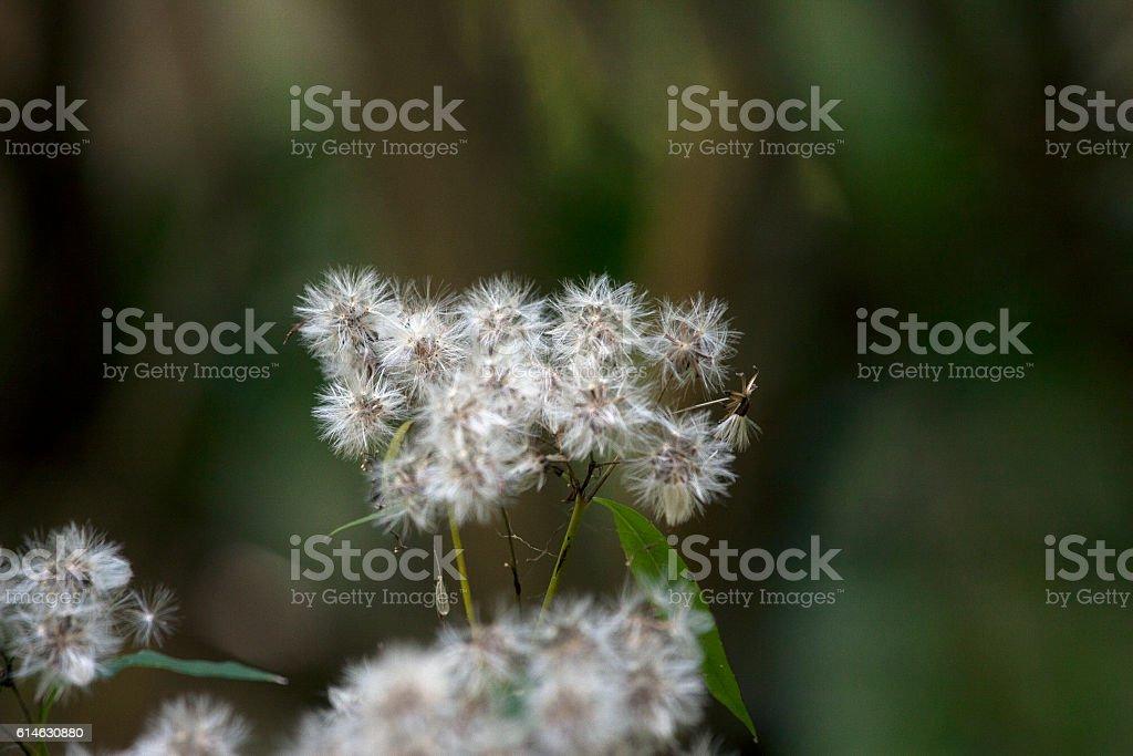 White flover closeup stock photo