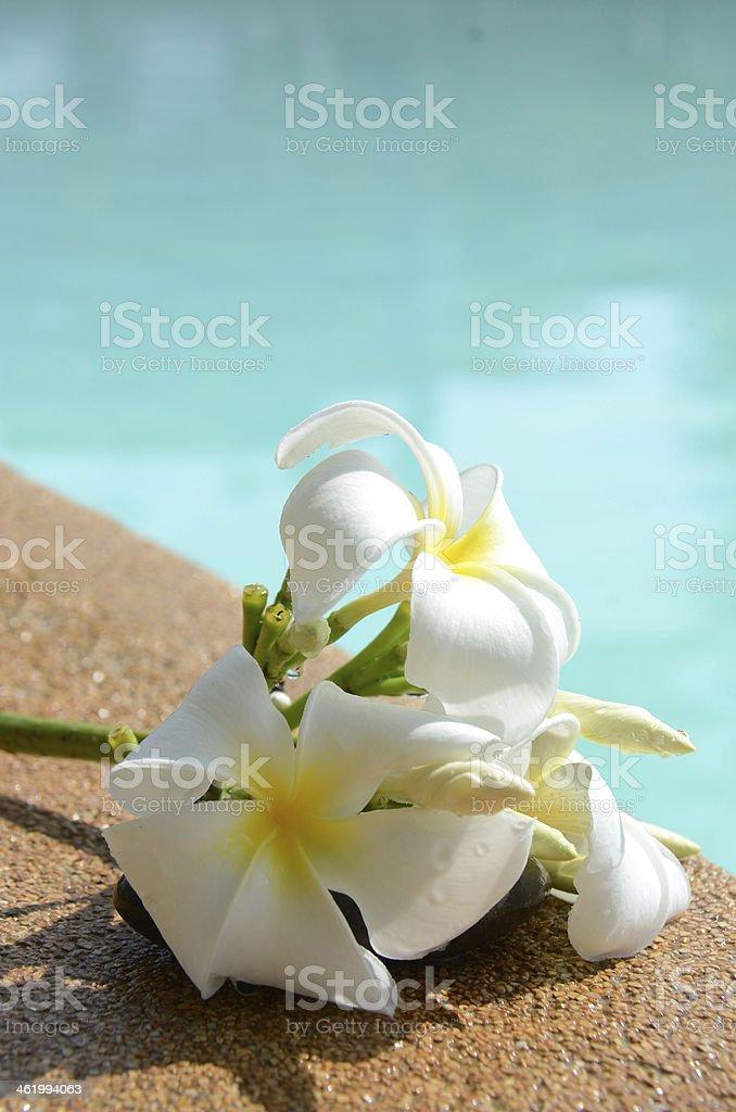 White flower at swimming pool stock photo