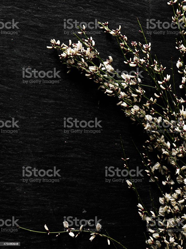 White flower branch stock photo
