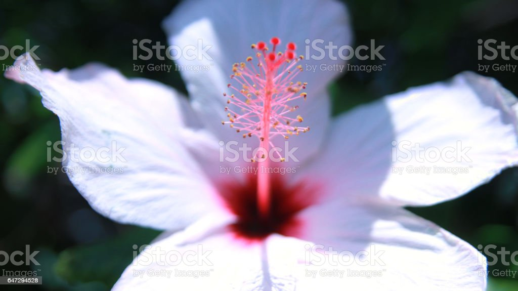 White flower close-up nature background stock photo