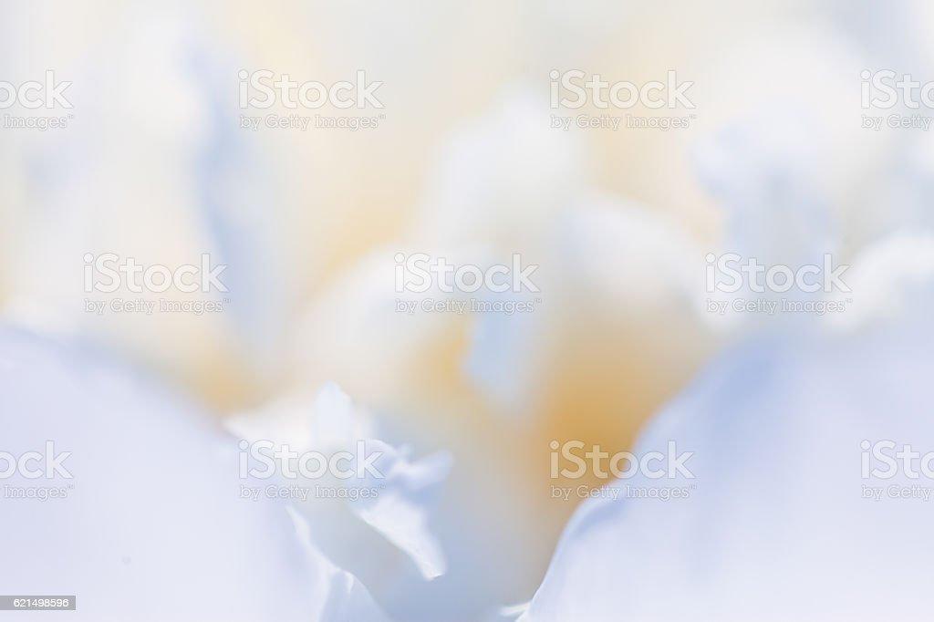 White flower closeup stock photo