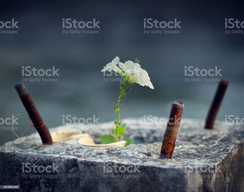 white flower growing on crack concrete pillar, soft focus stock photo