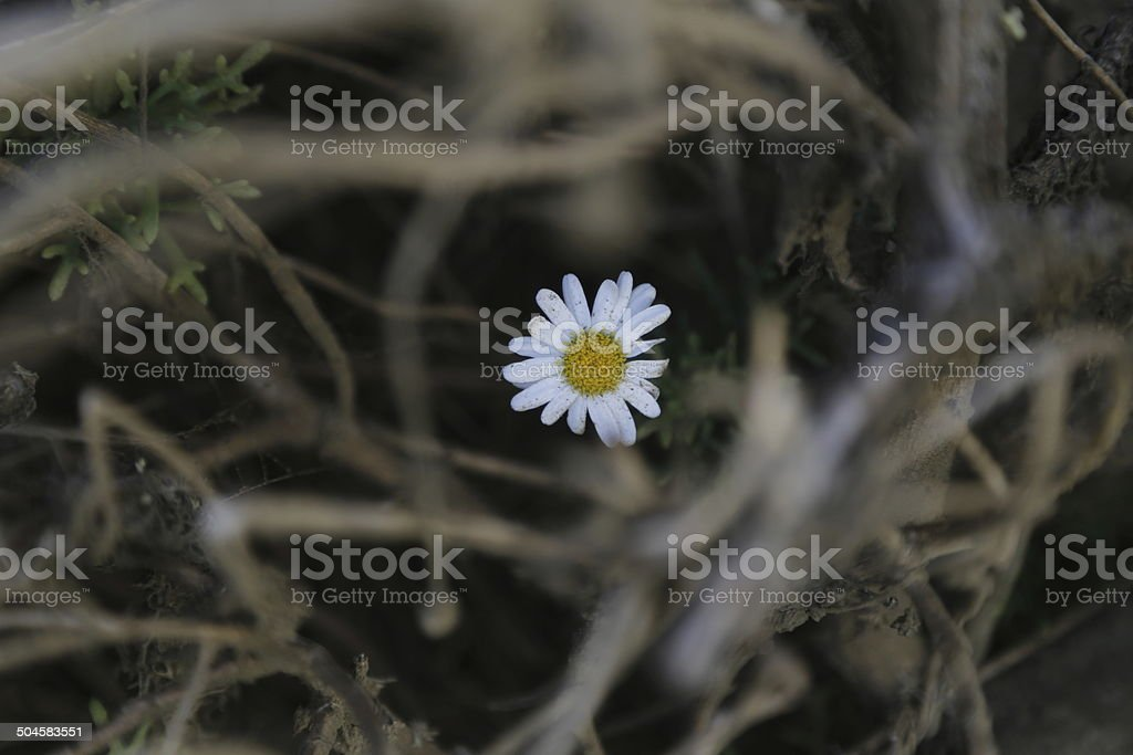 white flower hidden in dried grass stock photo