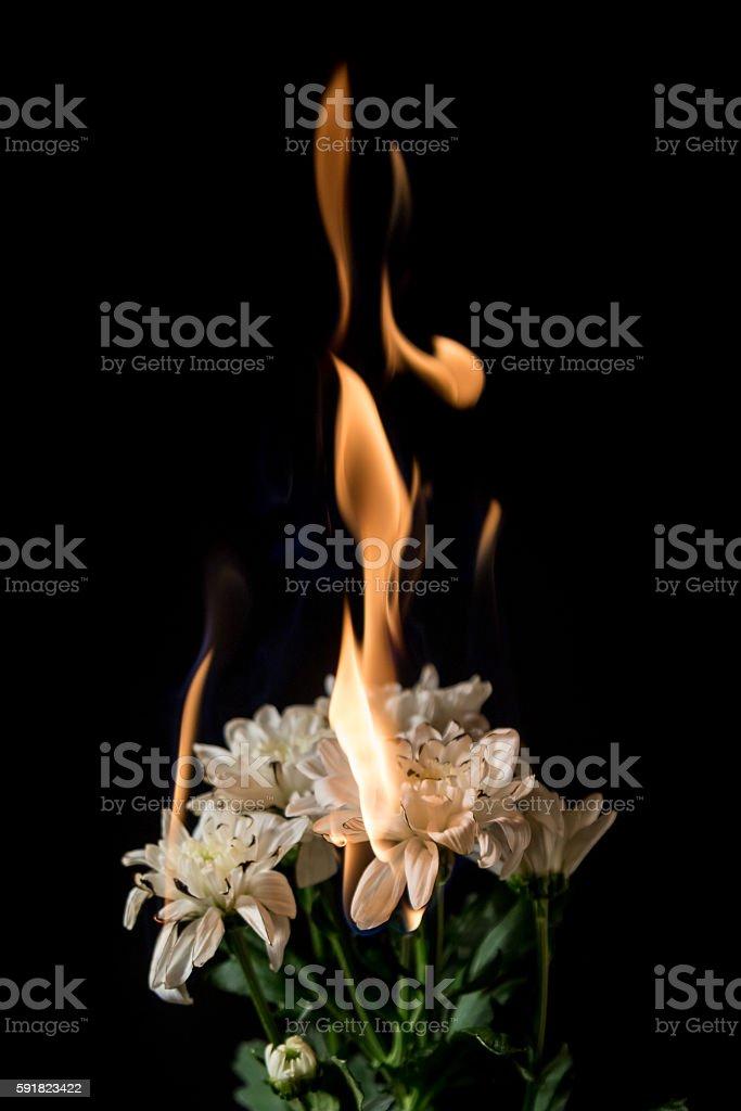 white flower on fire stock photo