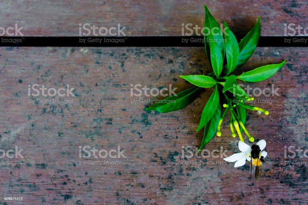 White flower on the wooden floor, stock photo
