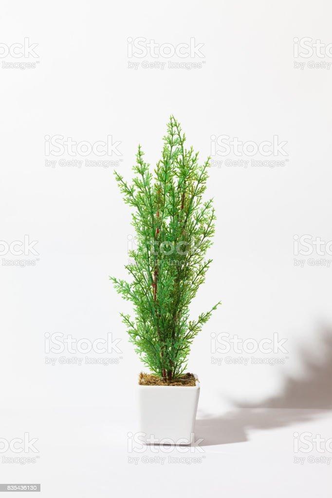White flowerpot stock photo