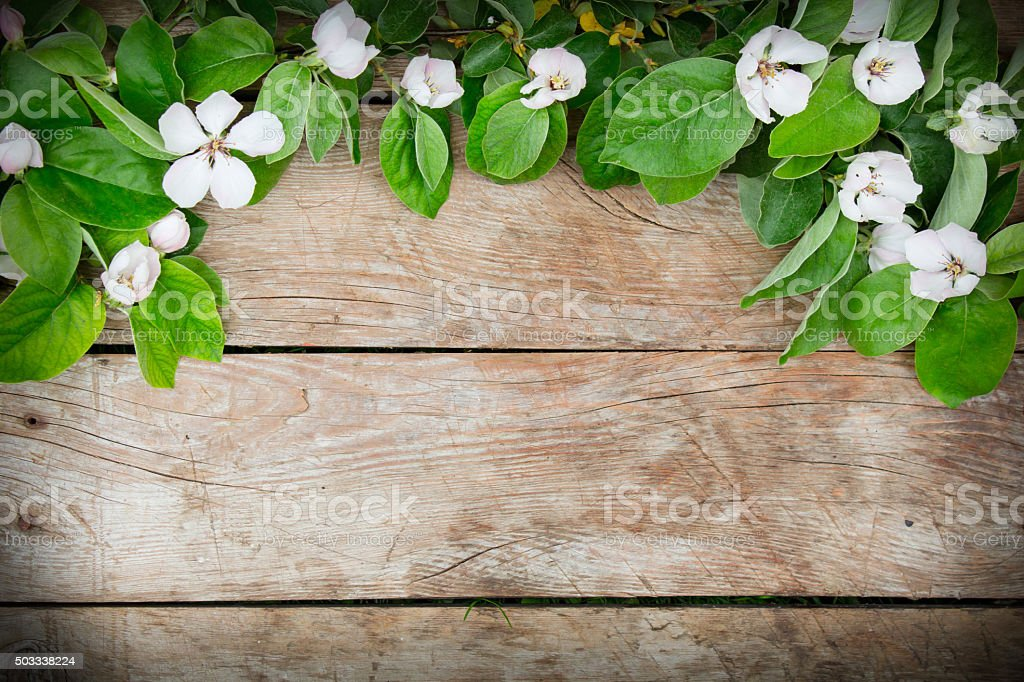 White flowers and green leaves arrangement on a wooden table stock photo