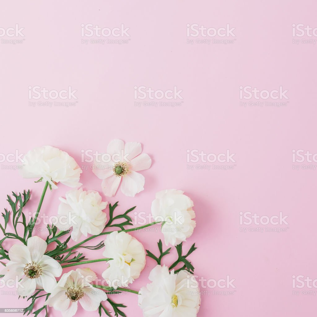 White flowers arrangement on pink background. Flat lay, top view. Flowers background. stock photo