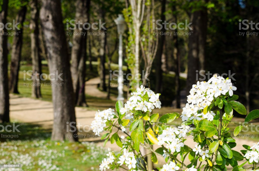 White flowers at a park stock photo