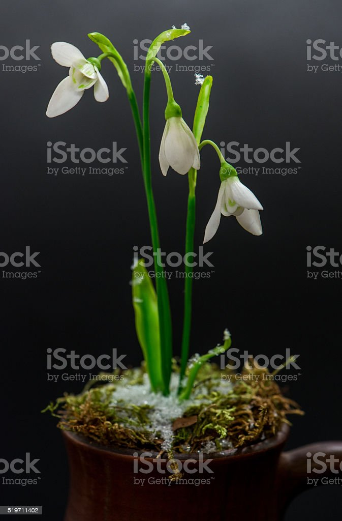White flowers from clay stock photo