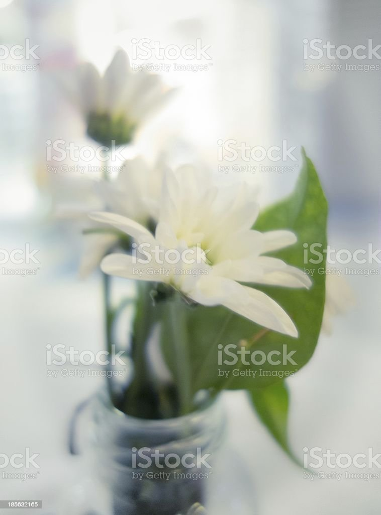 White Flowers Green Leaves royalty-free stock photo