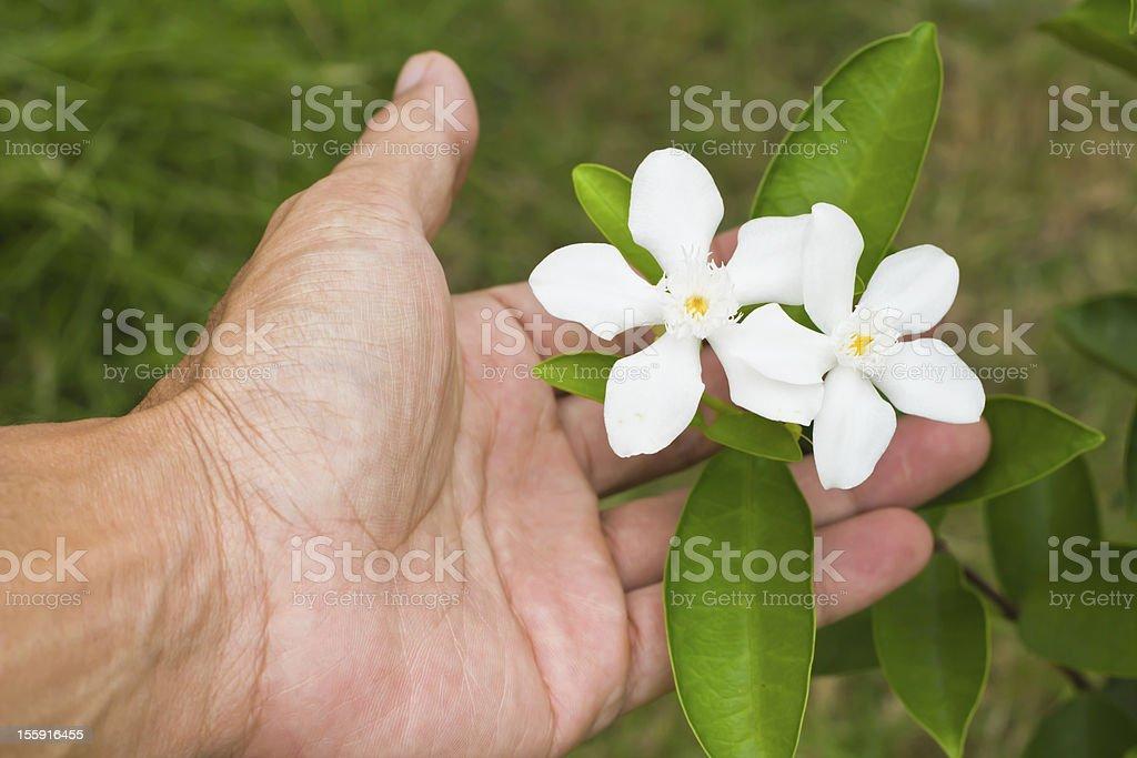 White flowers in the garden. stock photo
