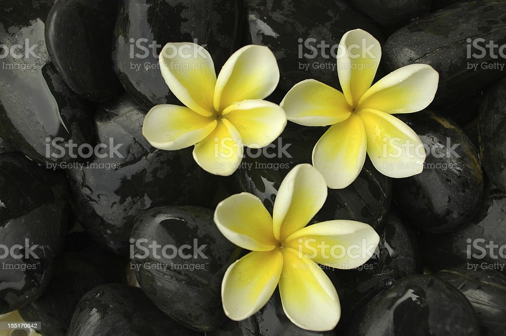 White flowers on black stones stock photo