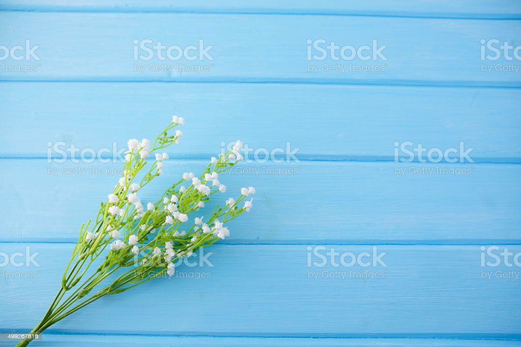white flowers on blue wooden background stock photo