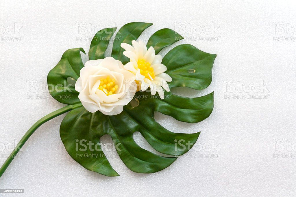 White flowers on green leaf royalty-free stock photo