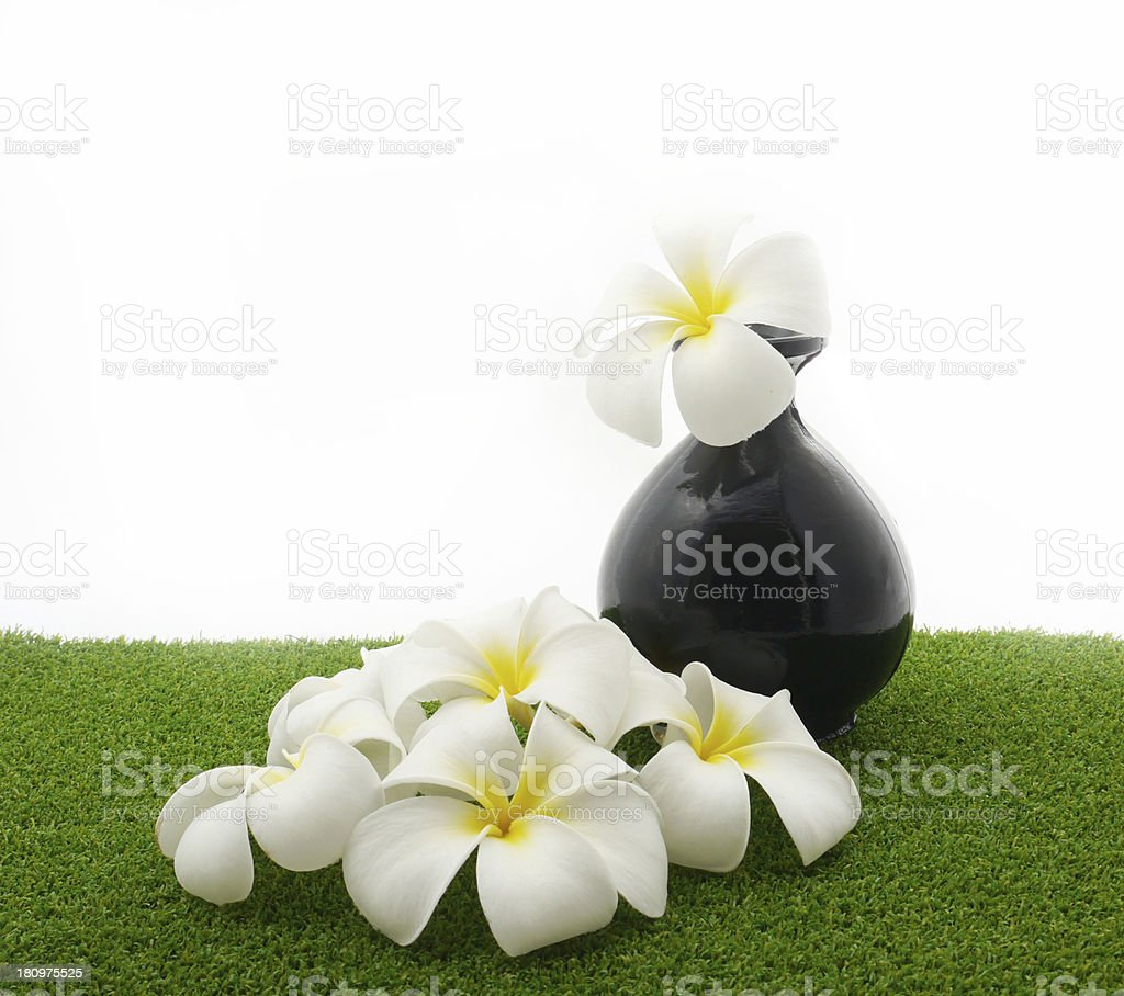 White flowers on green . royalty-free stock photo