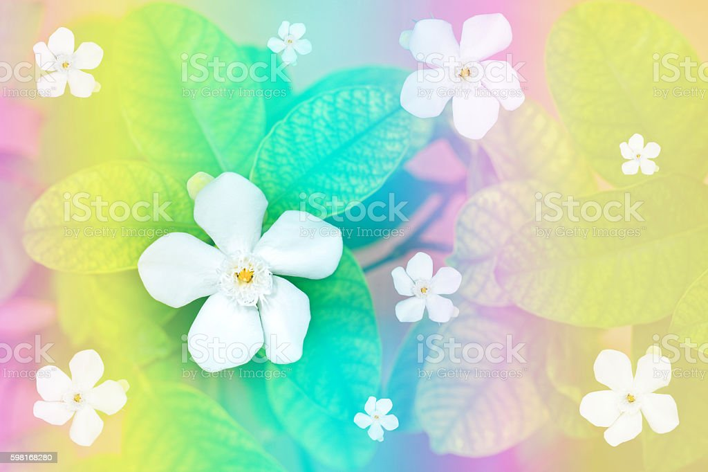 White flowers on the leaves with rainbow background, stock photo