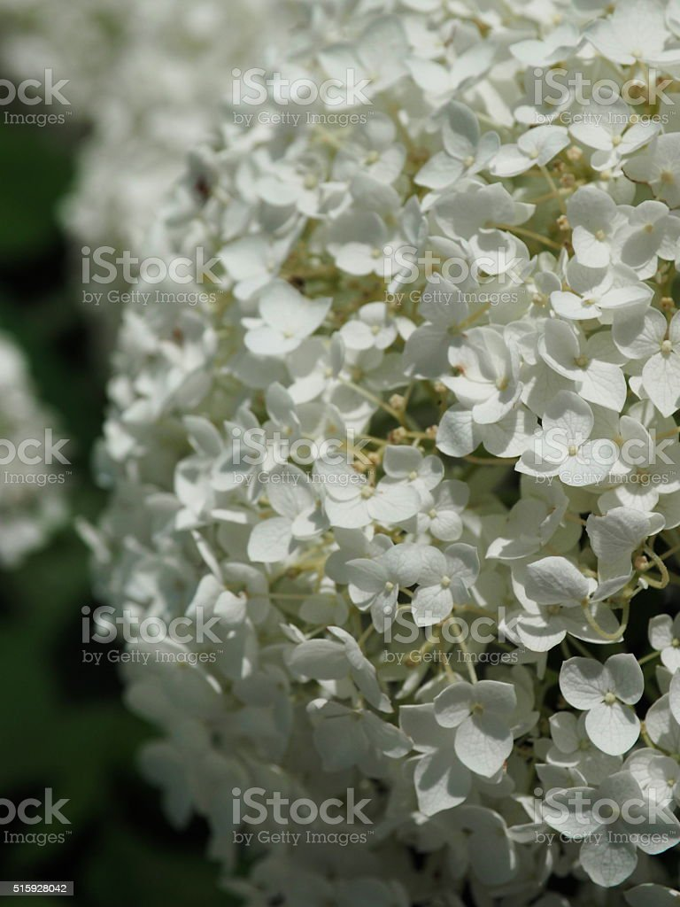 흰색 꽃 royalty-free 스톡 사진