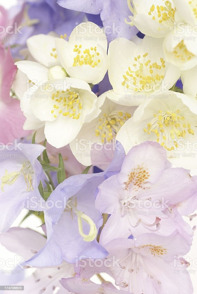 White flowers with pink and purple in the corner royalty-free stock photo