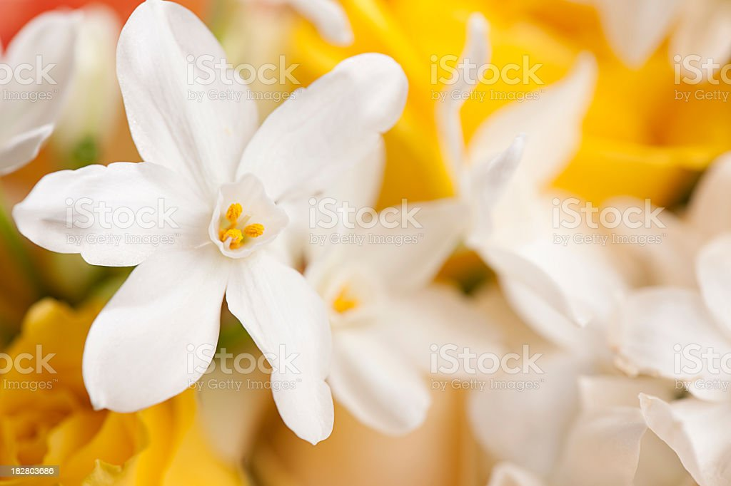 White flowers with yellow roses in the background stock photo