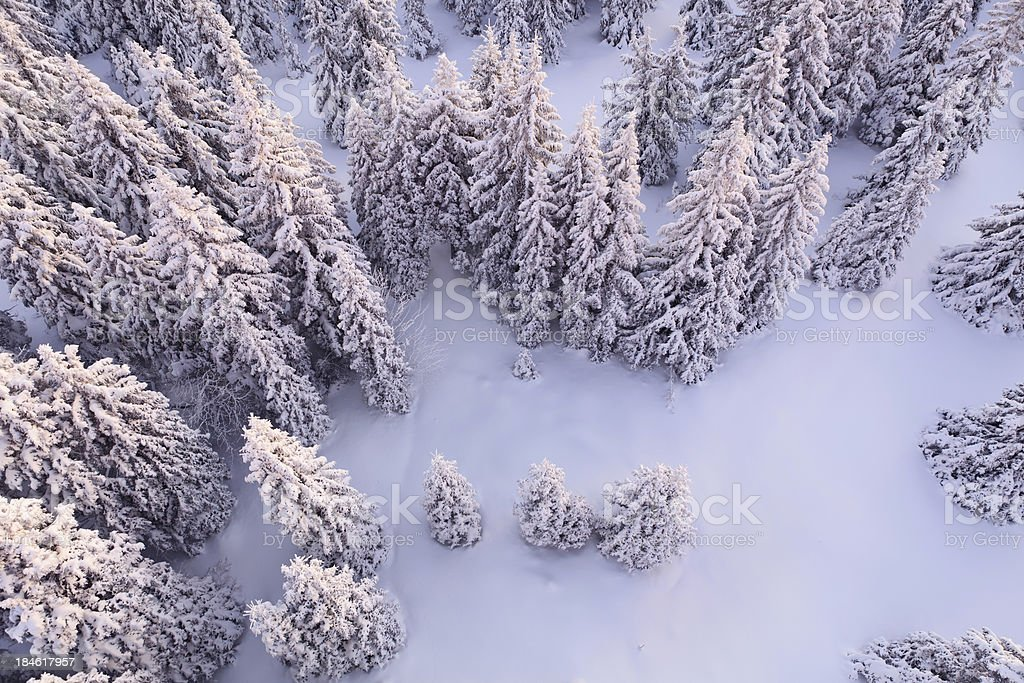 White Forest stock photo