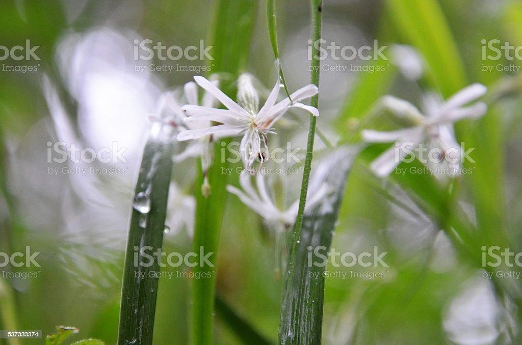 Blanc de la forêt de petite fleur sous la pluie photo libre de droits