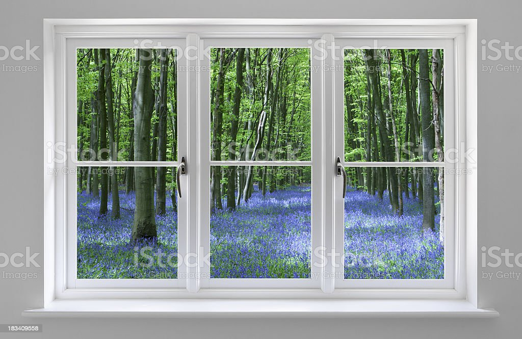 white framed window and bluebell wood stock photo