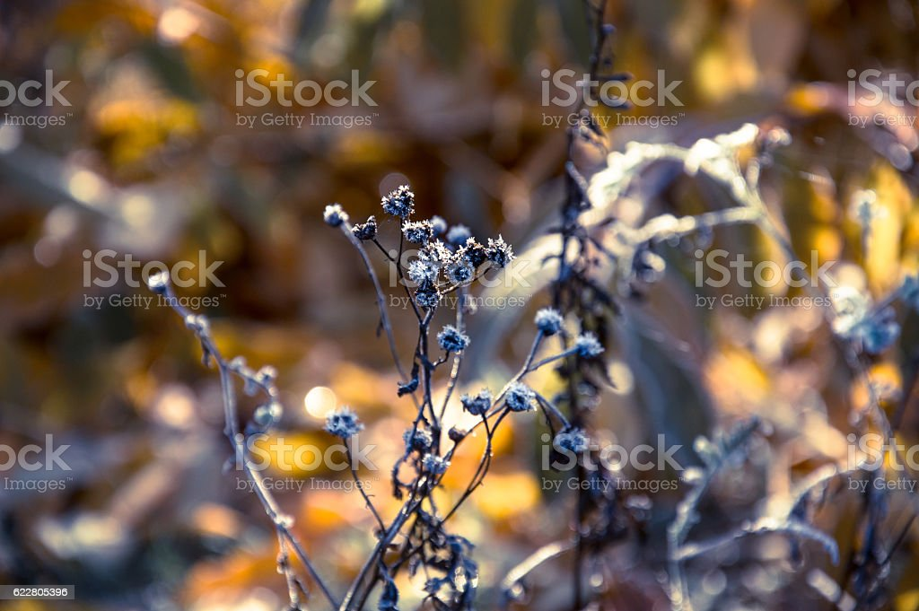 White frost on autumn leaves stock photo