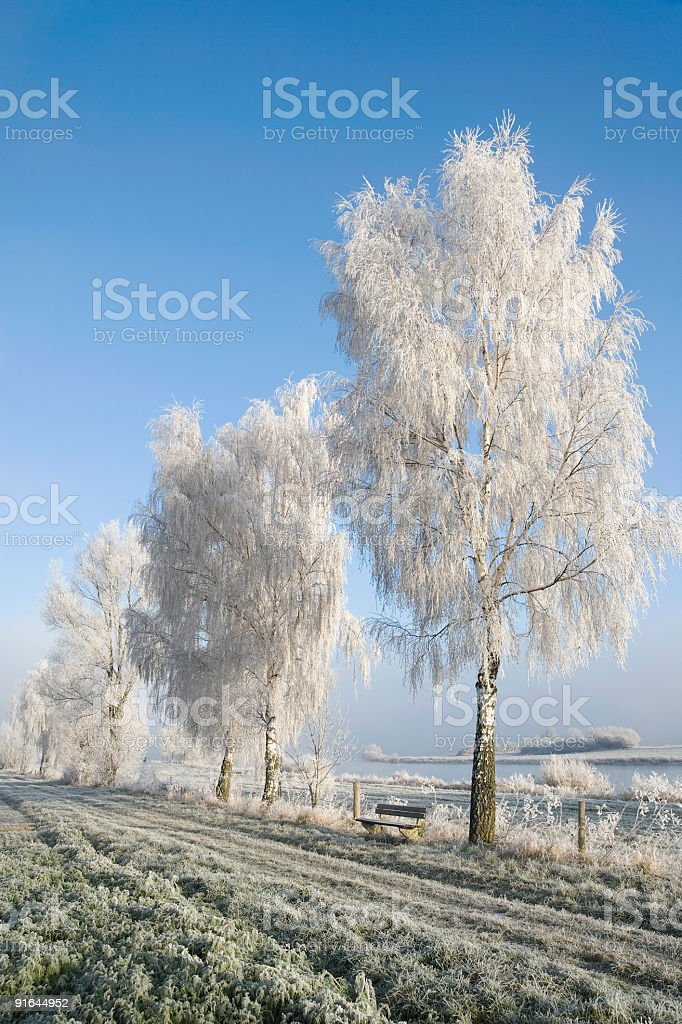 White frost on birch trees countryside (XXL) royalty-free stock photo