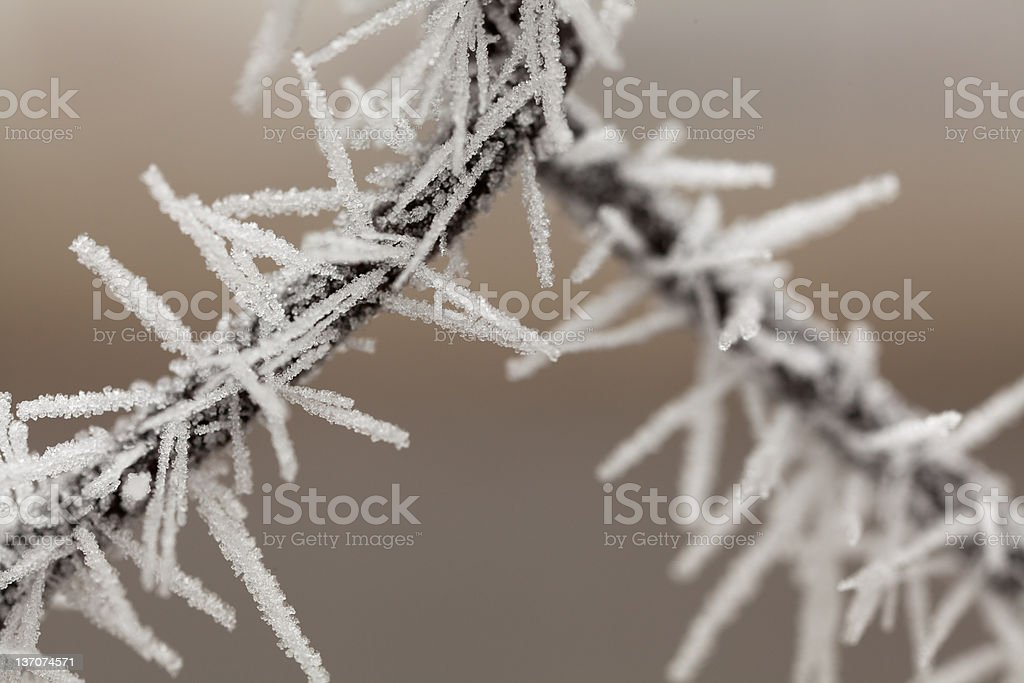 White frost royalty-free stock photo